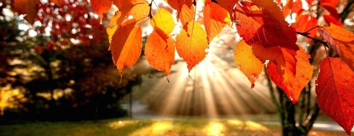 autumn-leaves-trees-the-rays-nature-700x300-(1).jpg